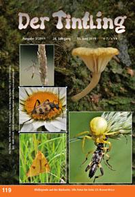 119 Heide-Flechtennabeling Lichenmphalia umbelifera