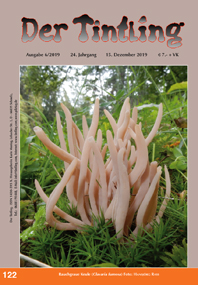 122 Rauchgraue Keule Clavaria fumosa