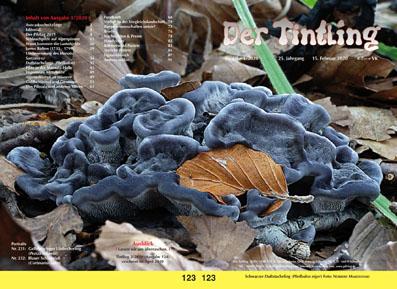 123 Schwarzer Duftstacheling Phellodon niger